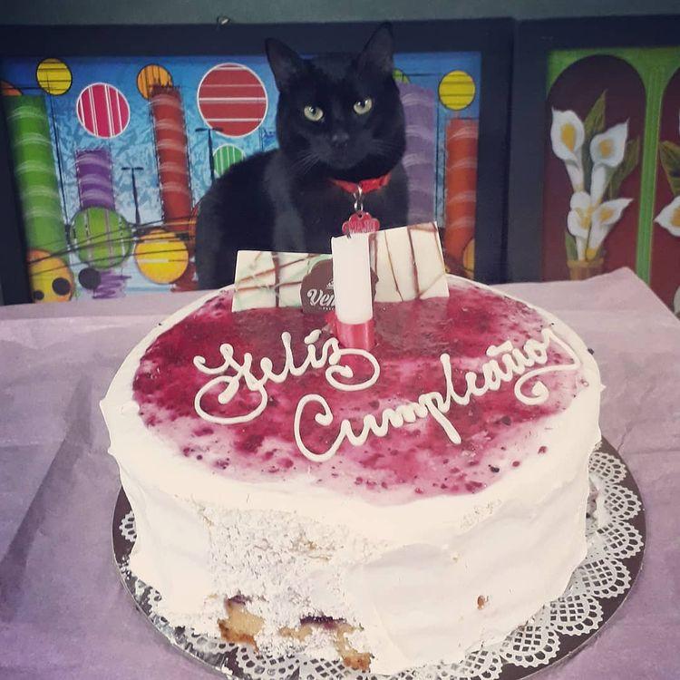 Cumpleaños de MaJu Cats Integrante del Equipo Maju Studios