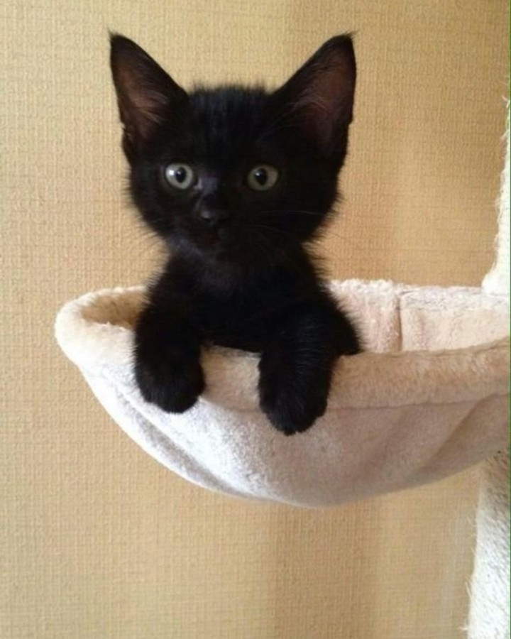 MaJu Cats es la mascota Oficial de MaJu Studios